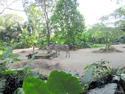 Zoo_IMG_0716